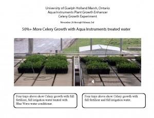 Celery Experiment2