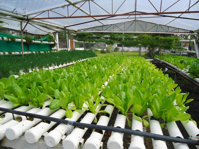 Agriculture and Hydroponics